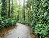 Coffee Estate for sale in chickamagalur