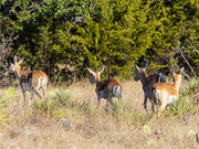 Texas Hunting Ranch for Sale 115 Acres | Kimble County,  Texas